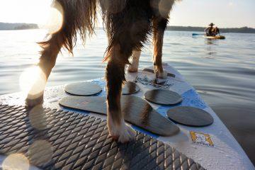 remar de stand up paddle com seu cão