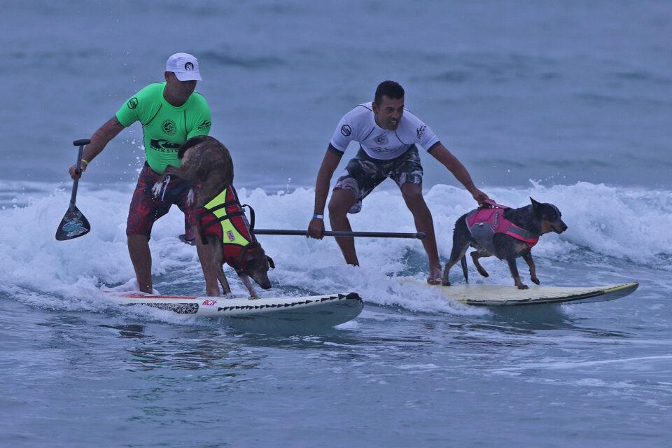 SurfDog SPSurf Camburi Foto Munir El Hage