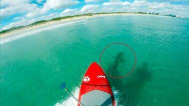 stand up paddle com tubarões