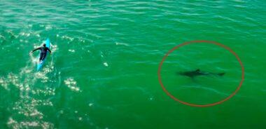 prone paddleboard tubarão