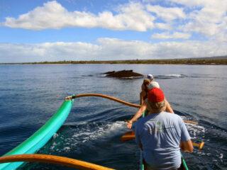 Como agir ao encontrar uma baleia no mar