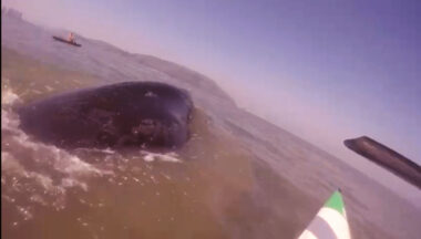 remadora baleia santos